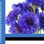 Eesti Vabariigi 26. taasiseseisvumispäeva tähistamine, 19. augustil kell 14.00 / 26th Anniversary of the Restoration of Estonian Independence on August 19th at 2pm